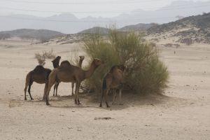 2013_0523_Jeddah_10